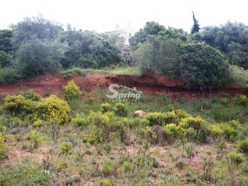 Plot for sale in Monte Canelas |