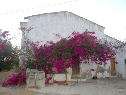 land w/ old and typical Algarvian House and sea view |