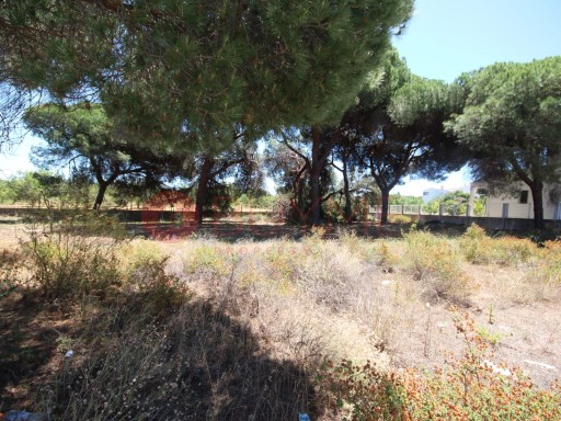 Land for sale in Quarteira |