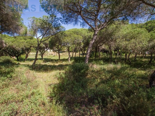 Plot of land for sale – Algarve – Quarteira – Fonte Santa. |