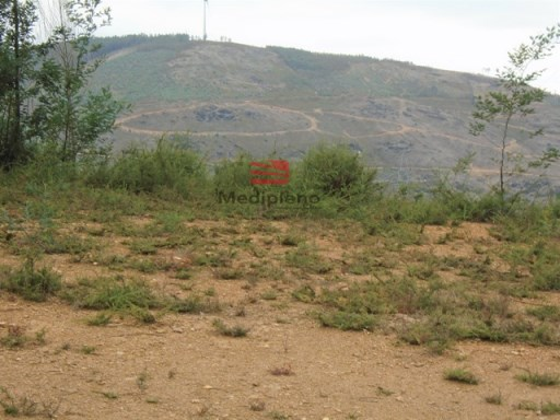 Land › Sever do Vouga |