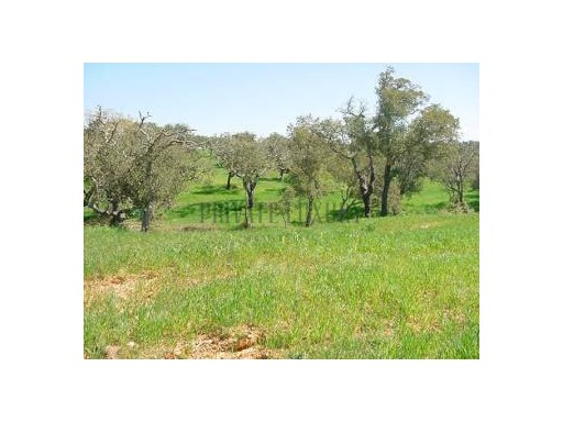ALCÁCER DO SAL - COMPORTA | LAND FOR SALE |