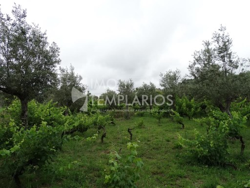 Habitable housing with 1,400 m2 in the parish of Areias, Ferreira do Zêzere%22/37