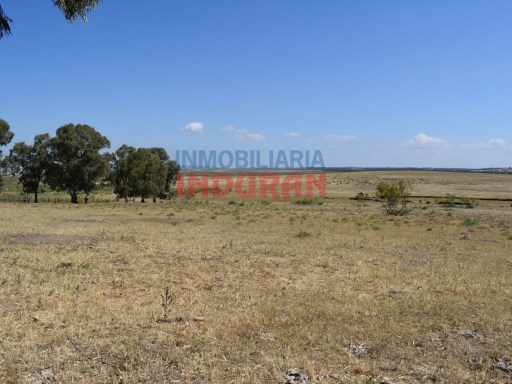 Cattle Ranch  › Monroy