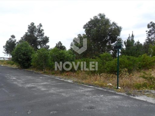 Flat terrain with 15,000 m2 next to the city of Marinha Grande |