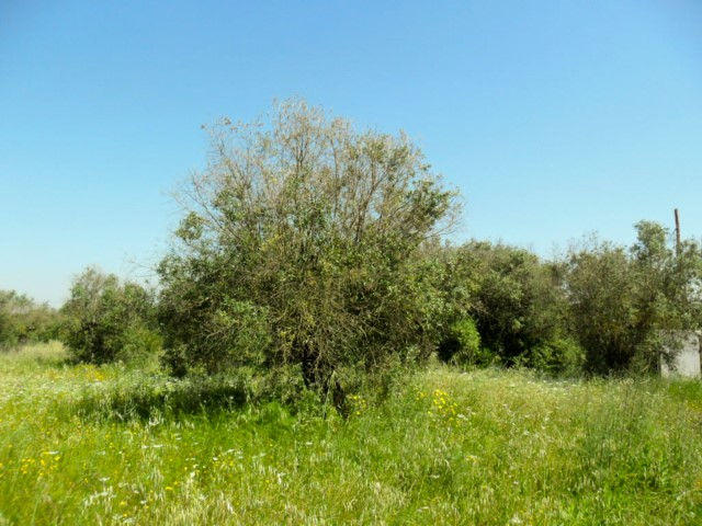 Land with construction Feasibility for 2 Storey Villa + Outbuilding, near Santarém, for sale