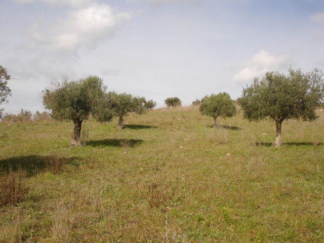 Land with approved project, in the countryside near the town, for sale