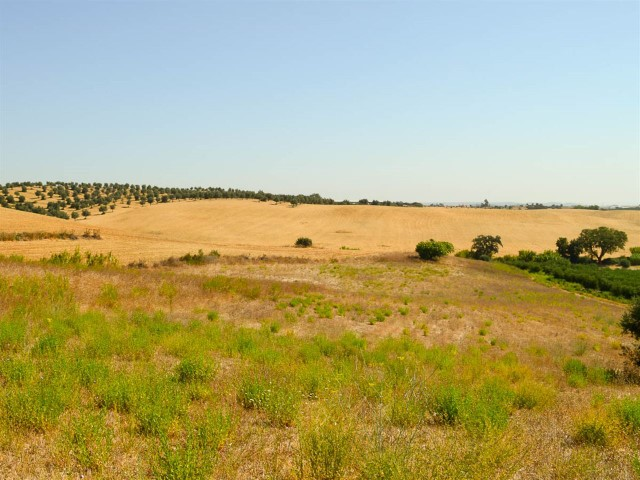 Ruin and land with 1 ha, near Santarém, less than 1 hour from Lisbon, for sale