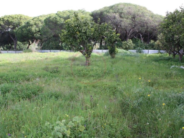 Plot of land near Almancil with viability for trade and services |
