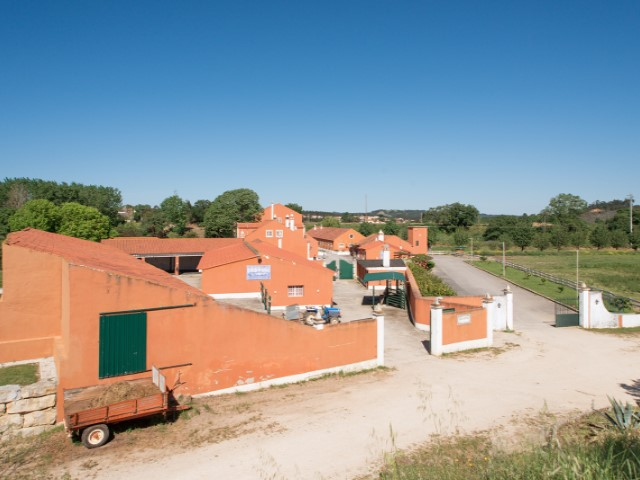 Farm for sale (83 ha) with accommodation/rural hotel, event facilities, Chapel, riding arena and agricultural land. It is located between Rio Maior and Santarém, less than 1 hour from Lisbon. |