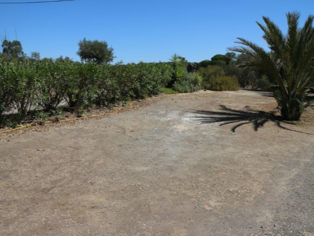 Alentejo with 5.9 ha, all sealed with small dam, near Alcácer do Sal |