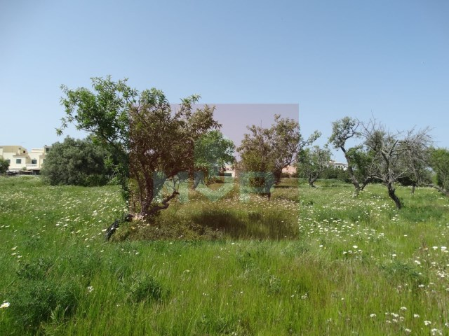 Urban land in Fuseta
