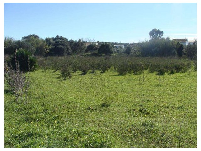 Land in Algoz |