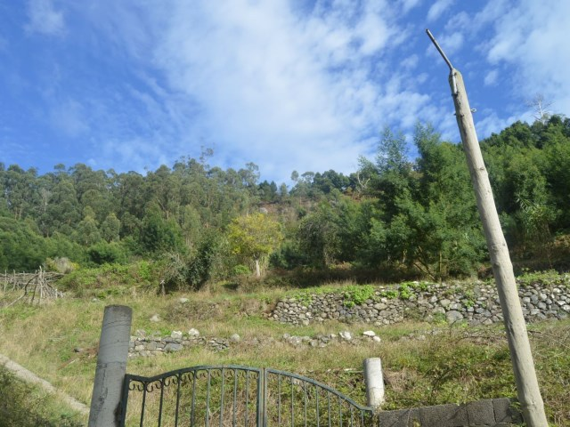Plot of land for sale - 2 hectares - Prime Properties Madeira Real Estate (2)