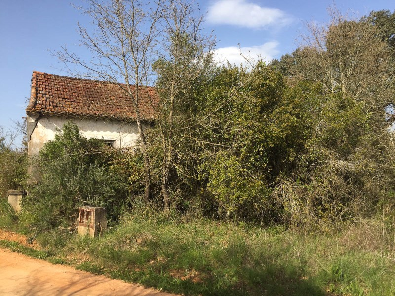 Land with ruin, in São Vicente do Paul, for sale