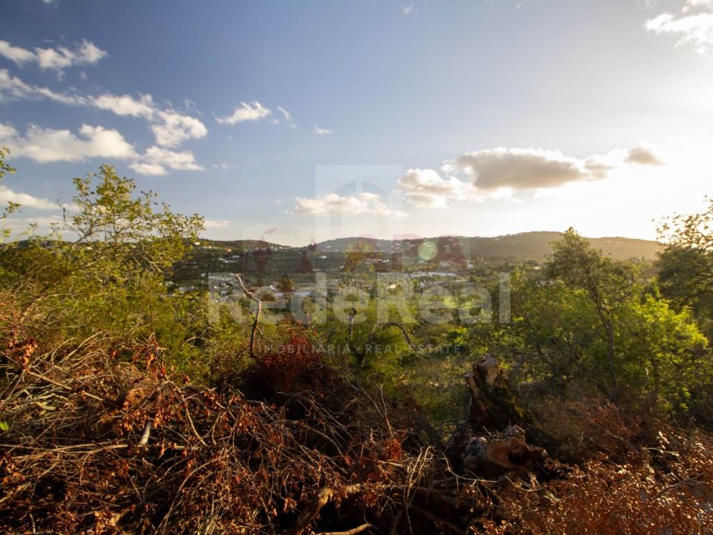 Terreno Rústico in São Brás de Alportel (2)