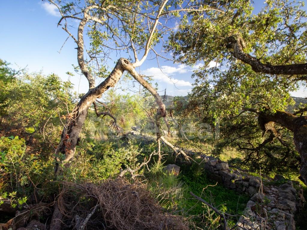 Terreno Rústico in São Brás de Alportel (3)