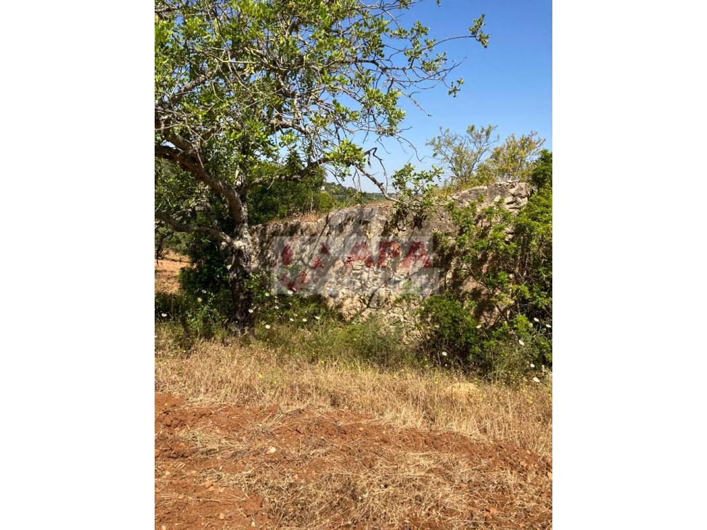 Terrain mixte in Santa Bárbara de Nexe (2)