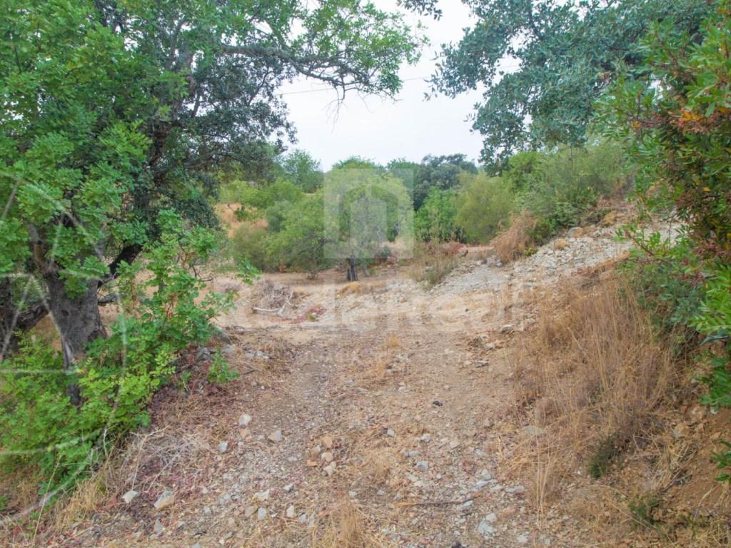 Plot of land S. Brás de Alportel  (3)