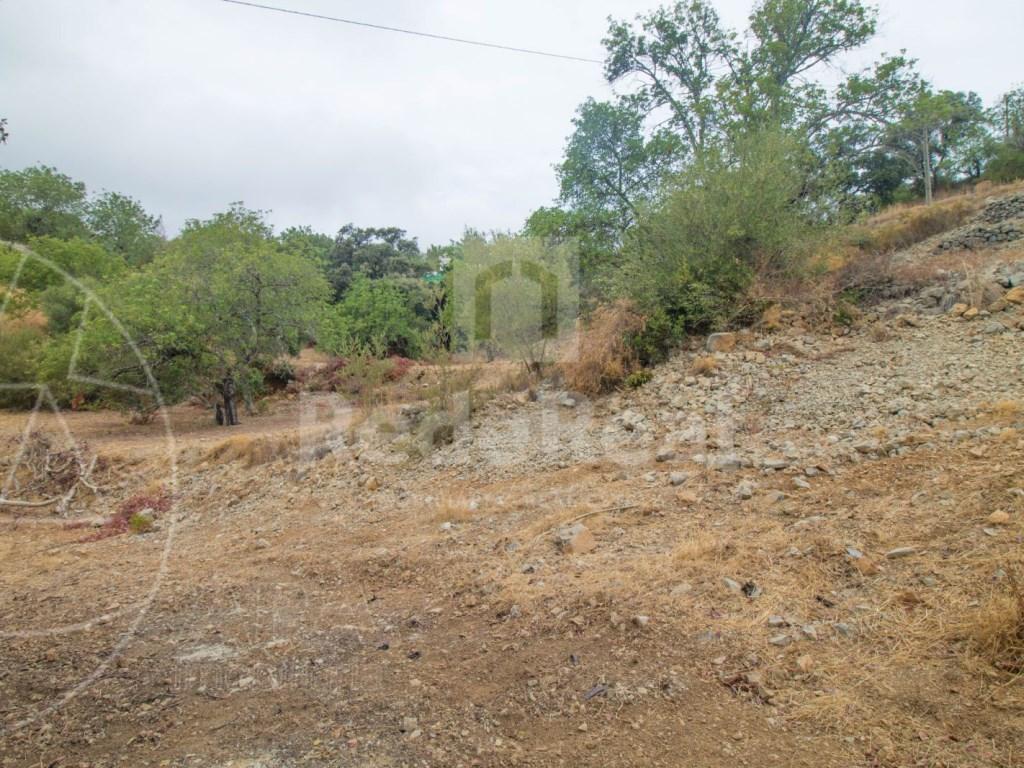 Plot of land S. Brás de Alportel  (4)