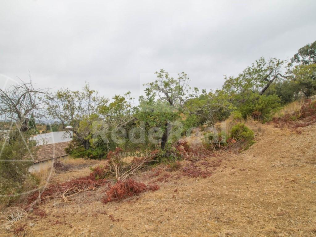 Plot of land S. Brás de Alportel  (5)