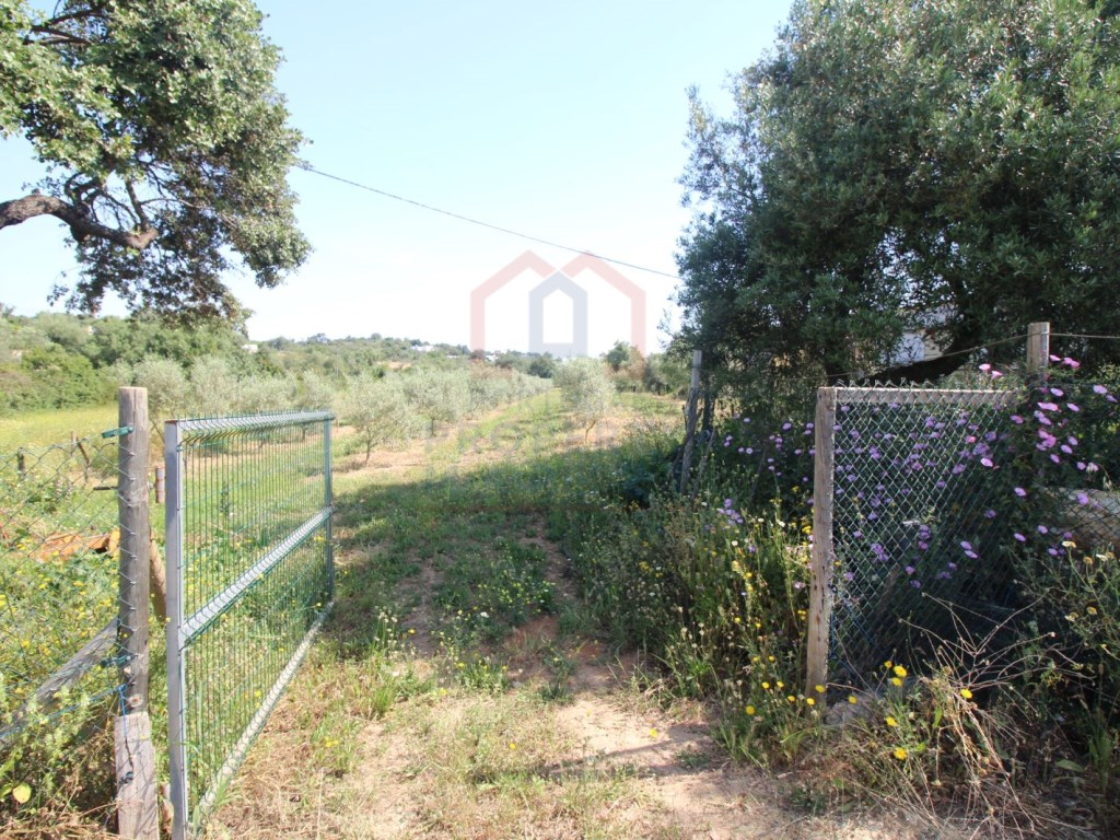 COUNTRY villa with a vineyard -near Quelfes - The Portugal