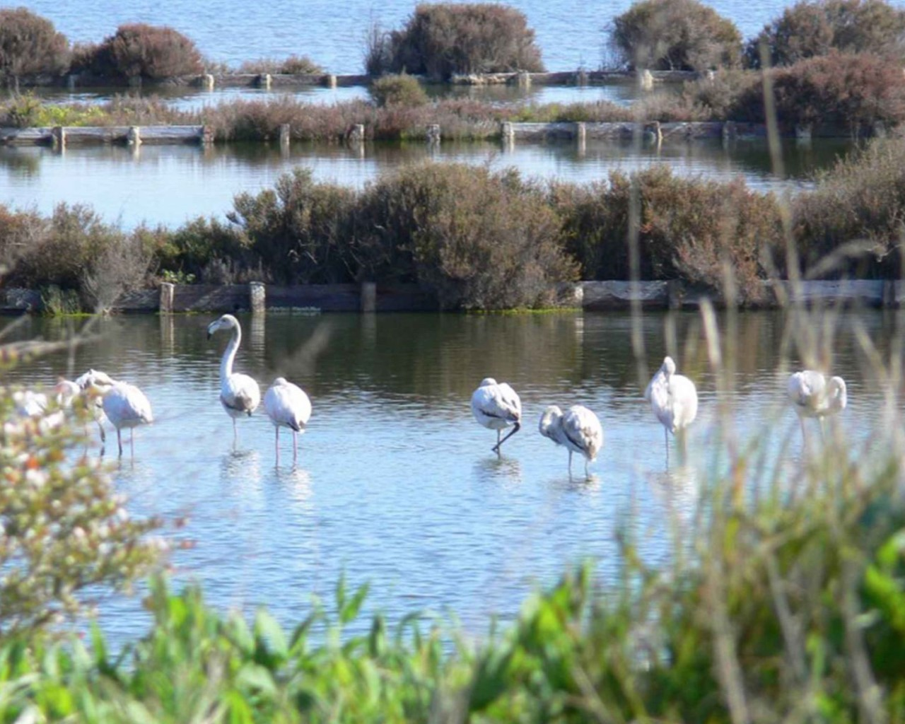 Reserve Naturelle Alcochete