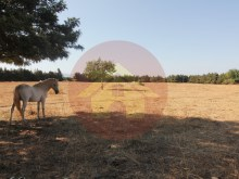 Farm with House sale in Silves, Algarve%53/76