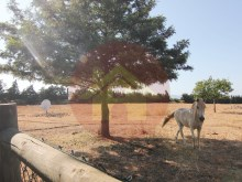 Farm with House sale in Silves, Algarve%54/76