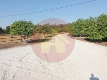 Farm with House sale in Silves, Algarve%60/76