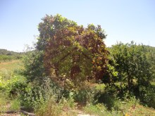 Farm-for sale-Portimao, Algarve%15/26