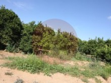 Farm-Sale-Lagoa, Algarve%5/26