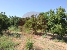Farm-Sale-Lagoa, Algarve%8/26