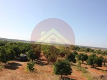 Farm-Sale-Lagoa, Algarve%12/26