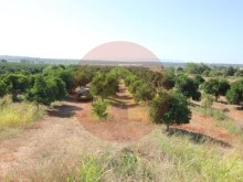 Farm-Sale-Lagoa, Algarve%13/26
