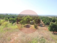 Farm-Sale-Lagoa, Algarve%14/26