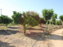 Farm-Sale-Lagoa, Algarve%25/26