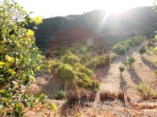 Farm-for sale-Portimao, Algarve%3/10