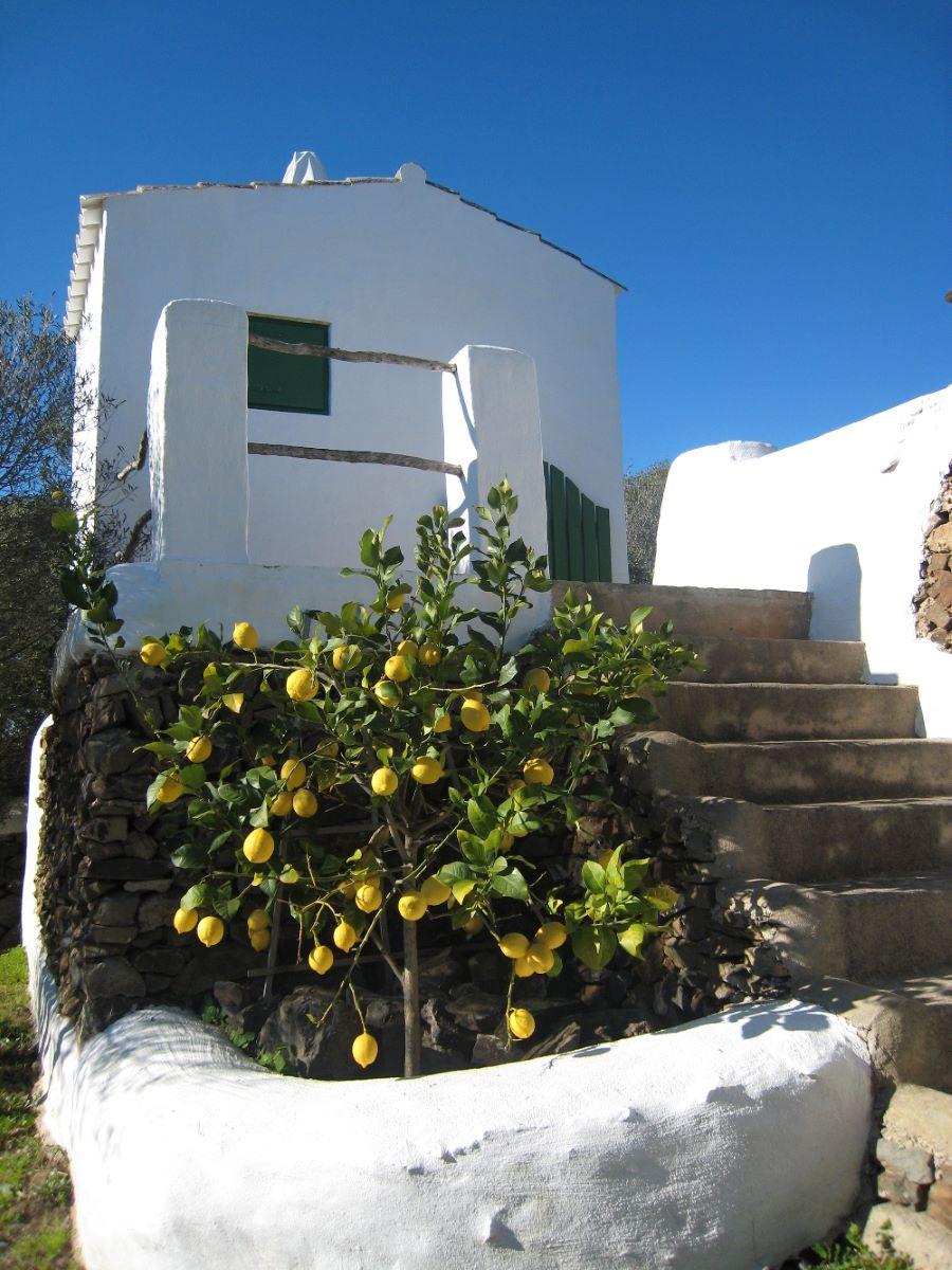 Country house in Es Grau Ref: M8182 33