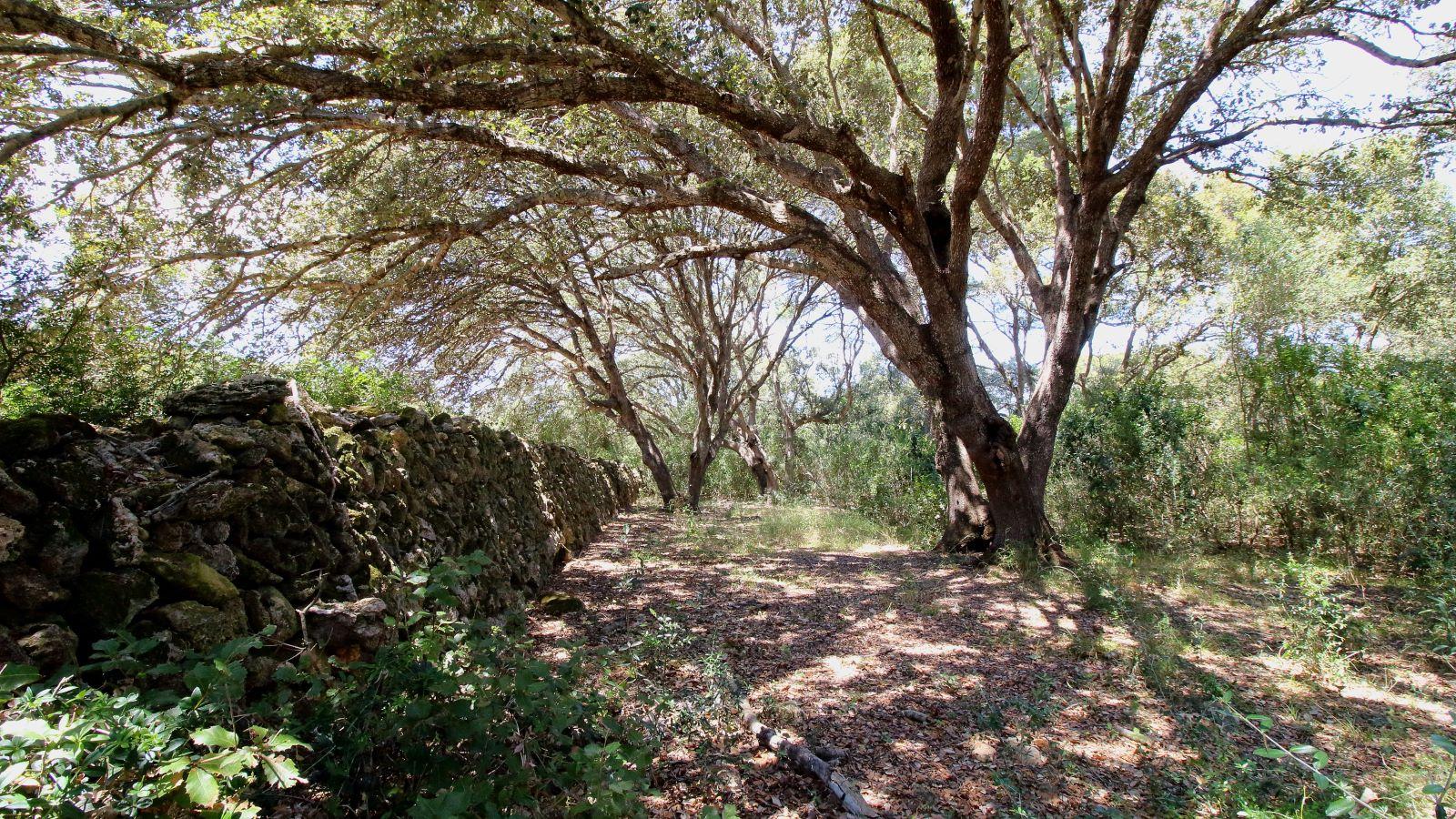 Agricultural property in Es Mercadal Ref: V2600 13