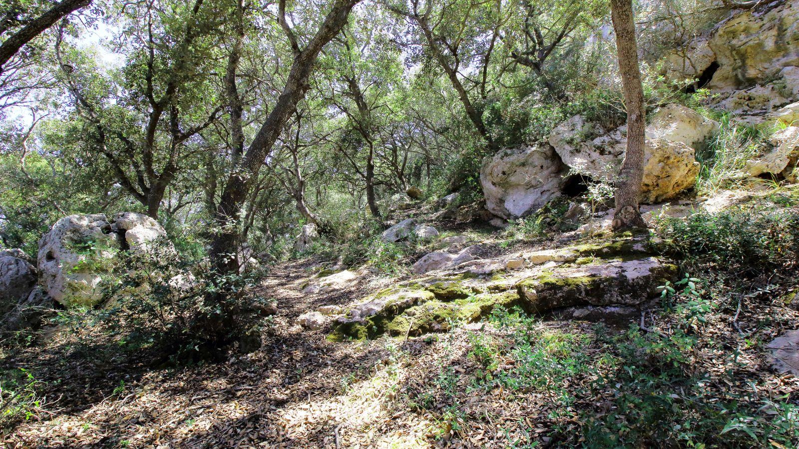 Agricultural property in Es Mercadal Ref: V2600 14