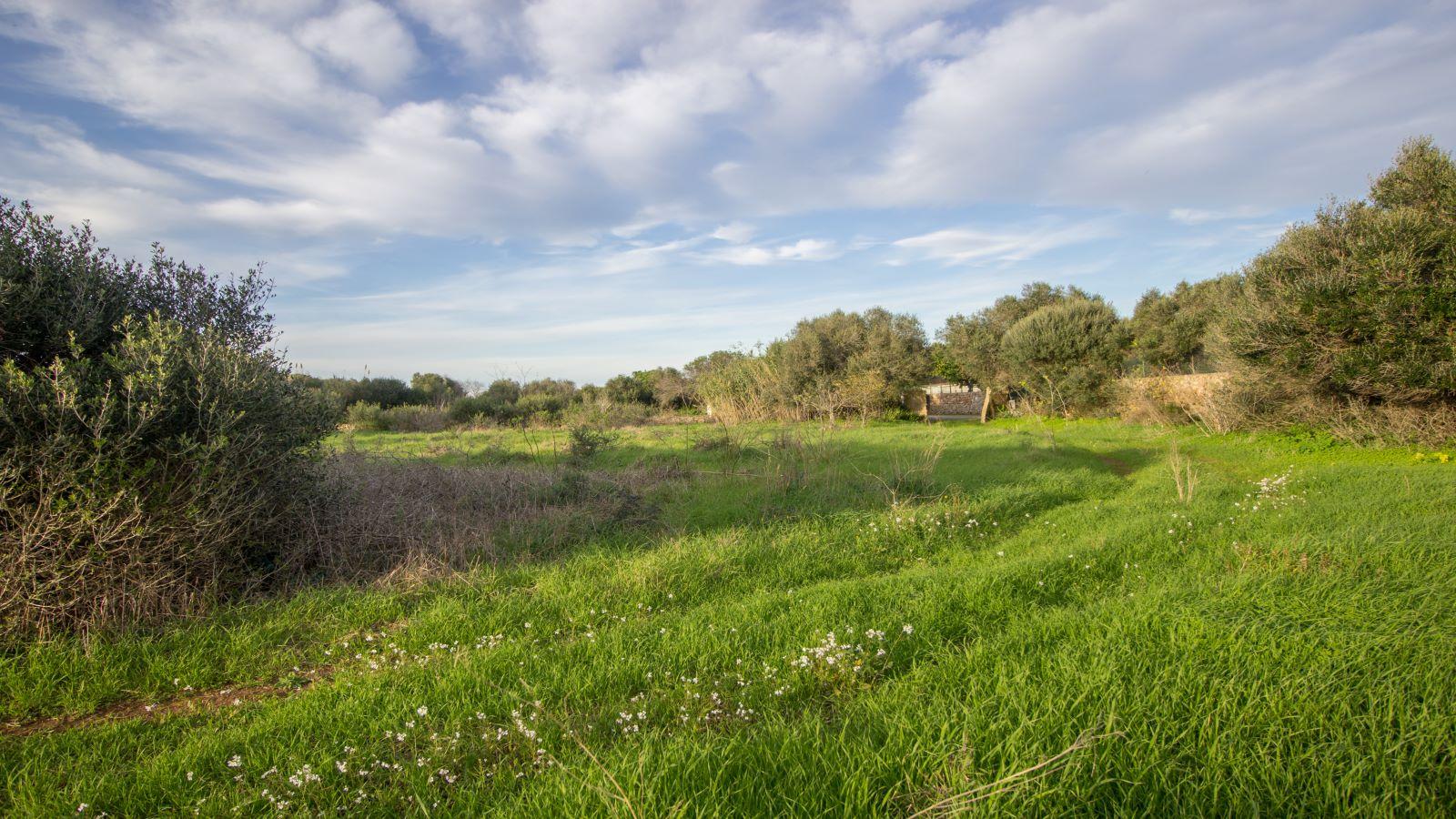 Land in Binissaida Ref: S2688 4