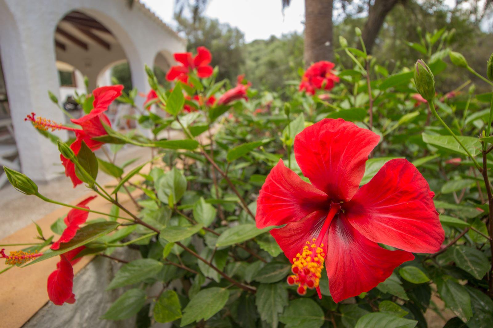 Villa à Binibeca Nou Ref: SH1256 47