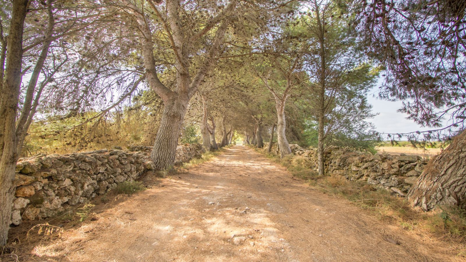 Country house in Ciutadella Ref: S2513 29