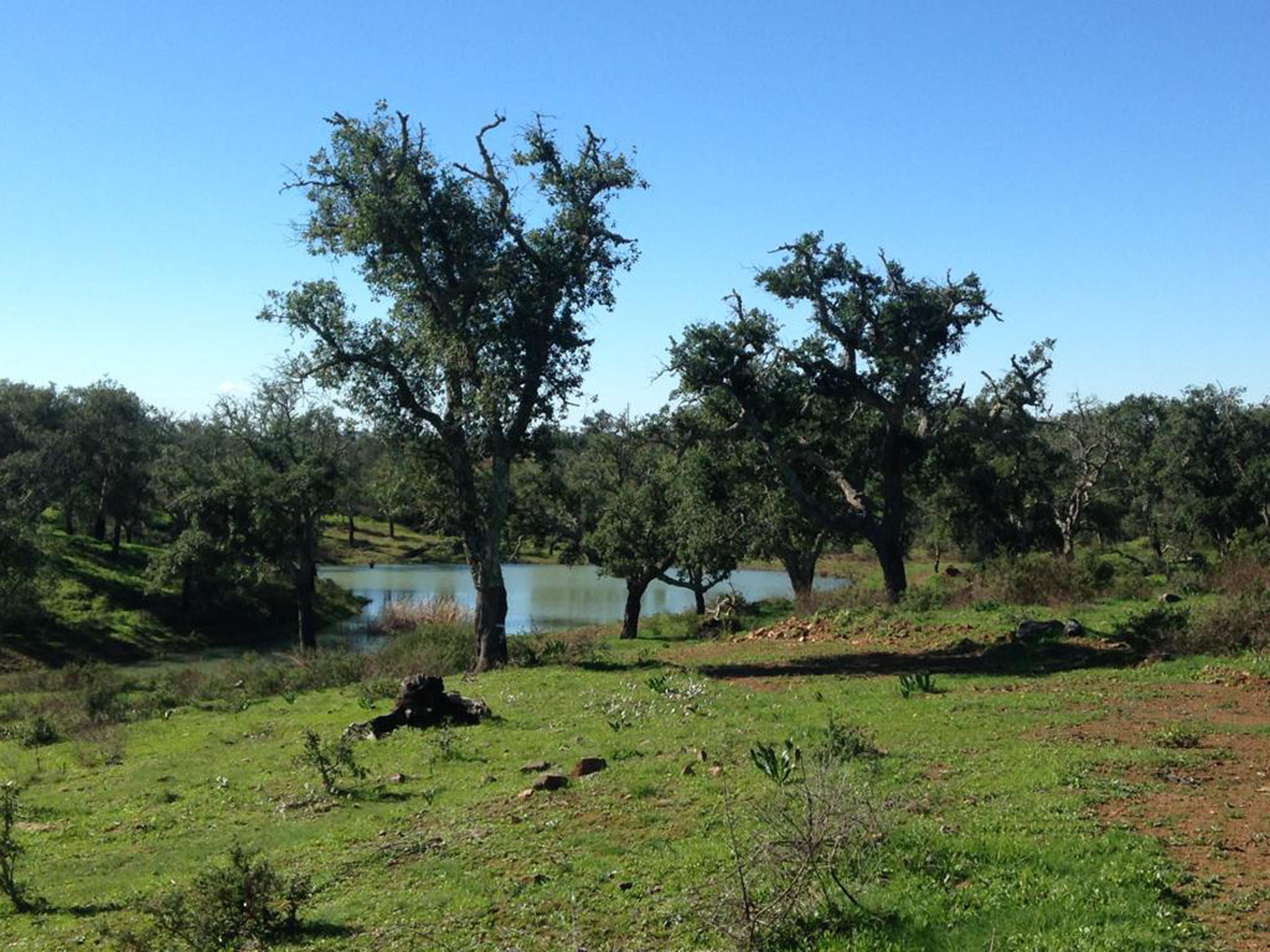 Used RuralLand in Grândola e Santa Margarida da Serra –