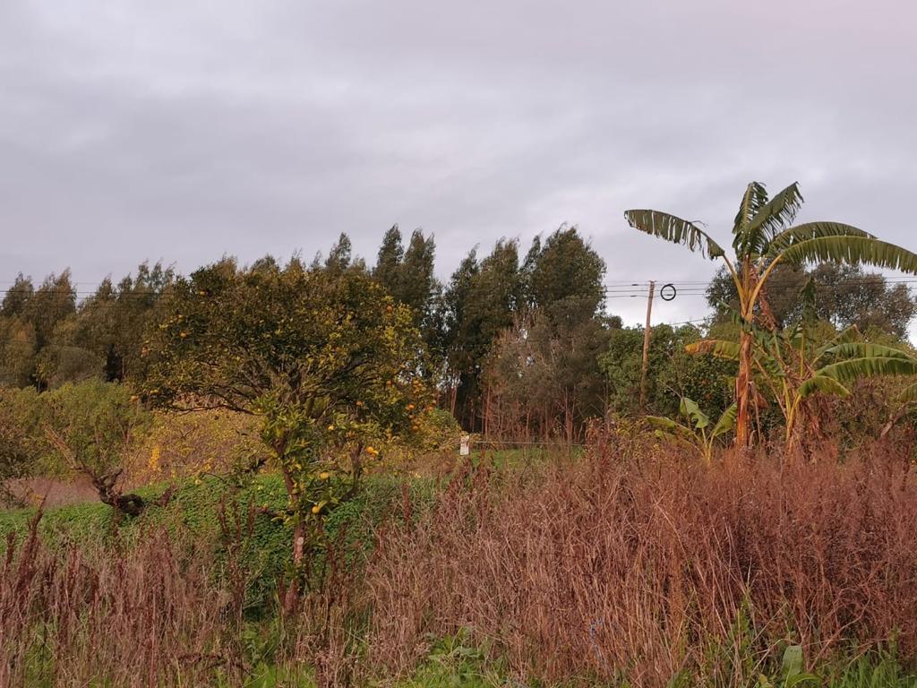 קינטה (חווה)+בית 5 חדרים, מחוז סטובל