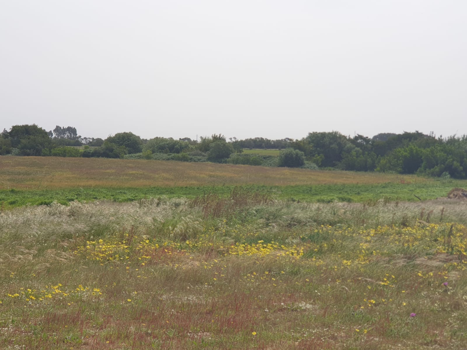 Rusticland