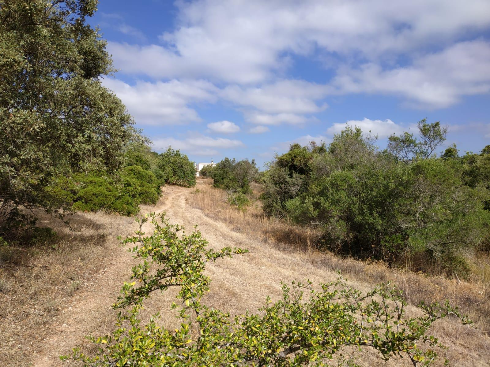 Land with Carob and almond trees in Santa Bárbara de Nexe