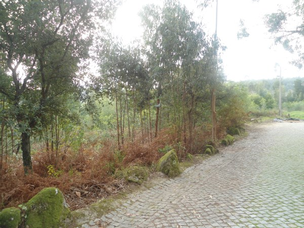 Terrain Braga Palmeira de Faro e Curvos - Portugal