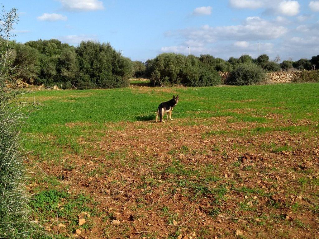 Propriété rustique à vendre près de Ciutadella-Terrain